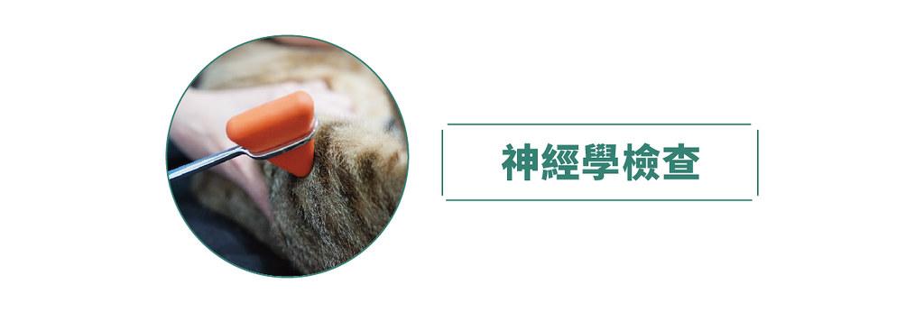 令人措手不及的犬貓癲癇 ── 神經科獸醫師解惑指導 - 窩窩 專注為動物發聲的獨立媒體