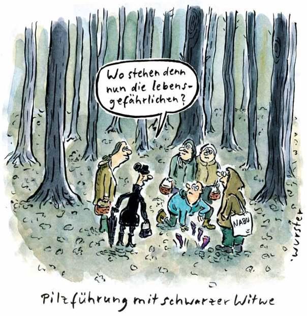Pilze Pilzführung Pilzvergiftung Wald Schwammerln