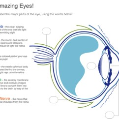 Eye Labeling Diagram Quiz 2016 Nissan Sentra Wiring Schlaefer Optometrists Campbellsport Wi Our Amazing Eyes
