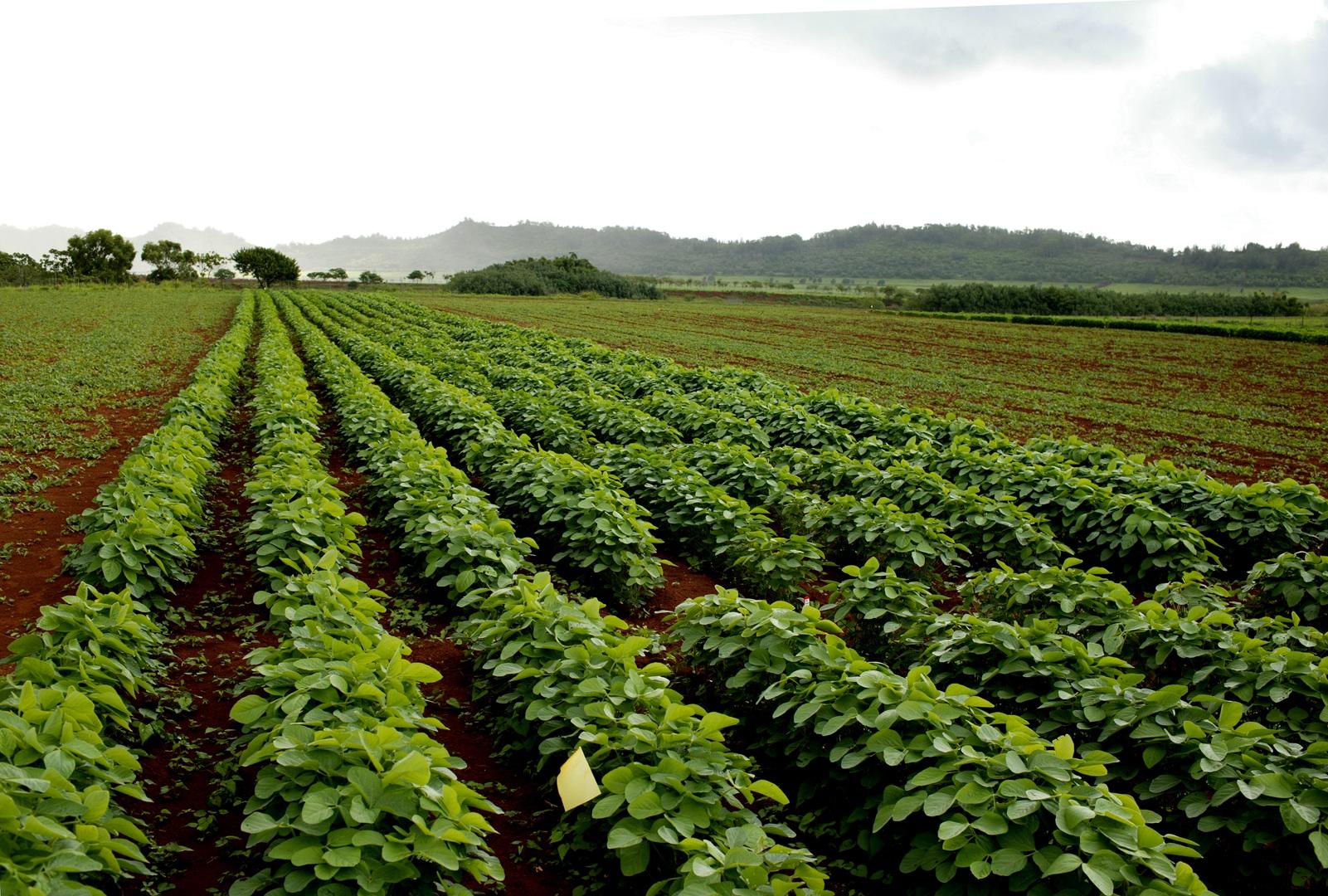 Economic Strength of Hawaii Seed Crop Industry Confirmed ...