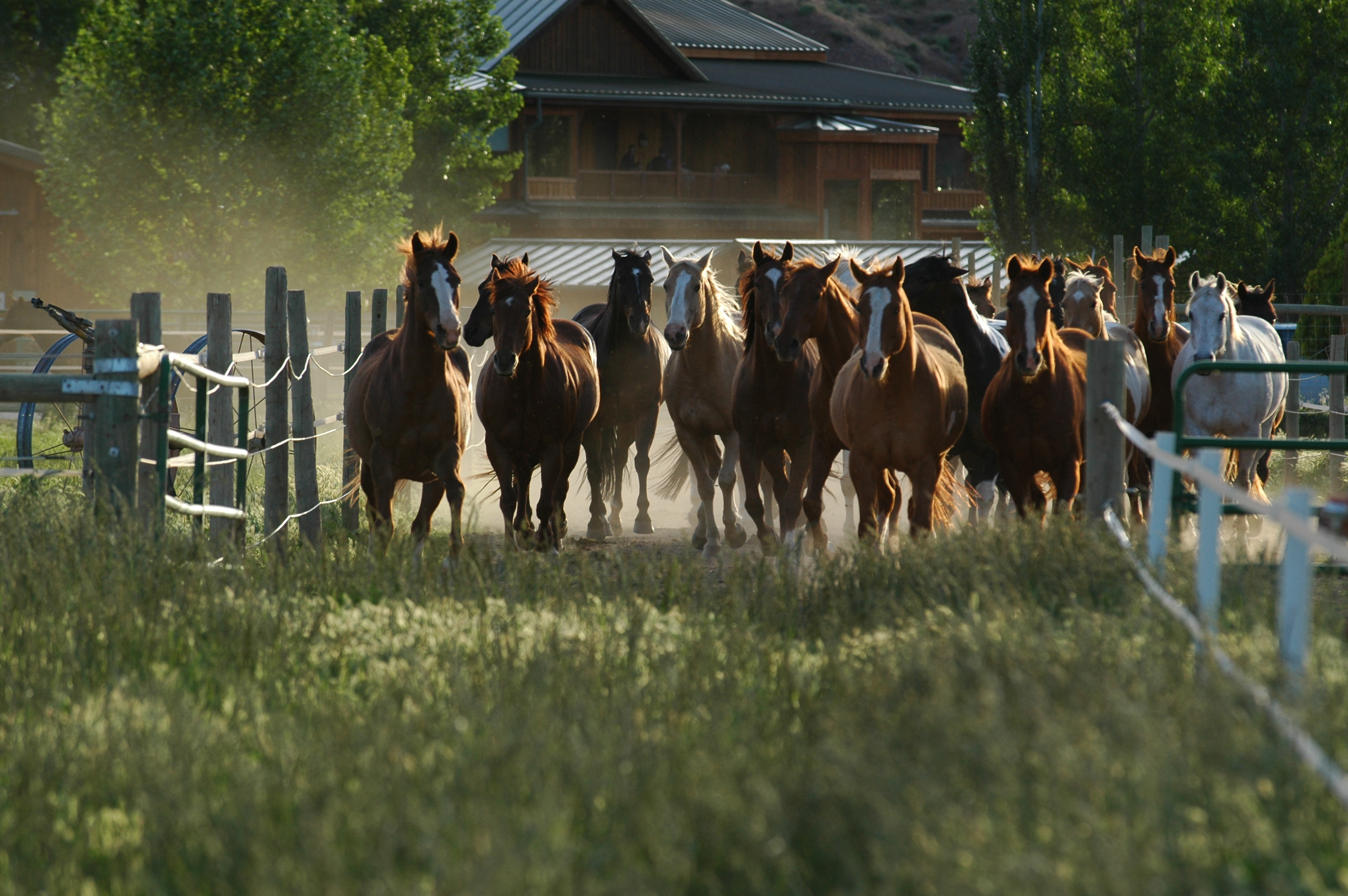 A Wild Western Guest Ranch Vacation Amp Equestrian