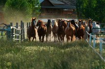 Wild Western Guest Ranch Vacation & Equestrian