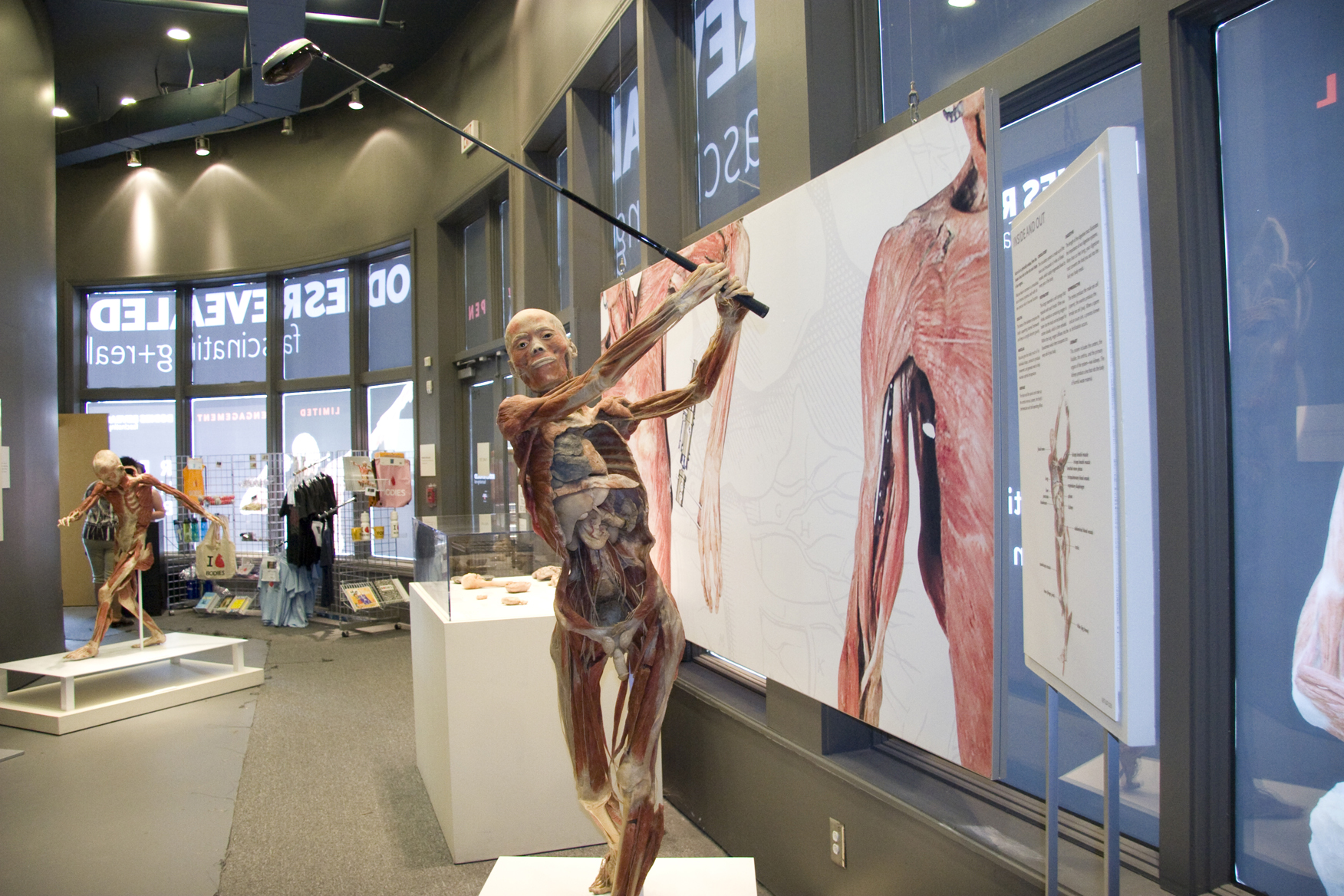 Bodies Revealed Exhibit In Myrtle Beach Is Approaching The