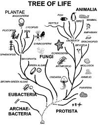 New Biotechnology and Ecology Sections Published at