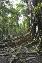 Guests enjoy rainforest walks on the Amazon river cruise
