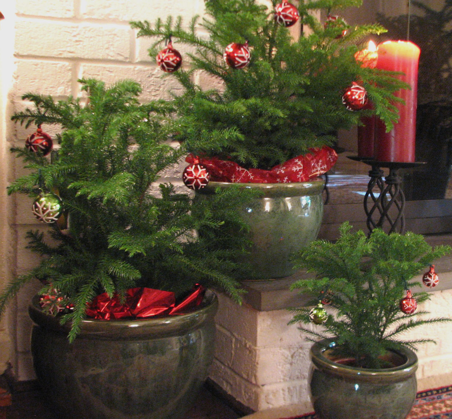 Decorate with Live Mini Christmas Trees This Holiday Season