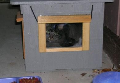 Outdoor Cat House Petsmart