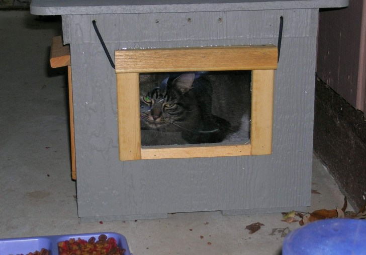 Outdoor Cat House Petsmart