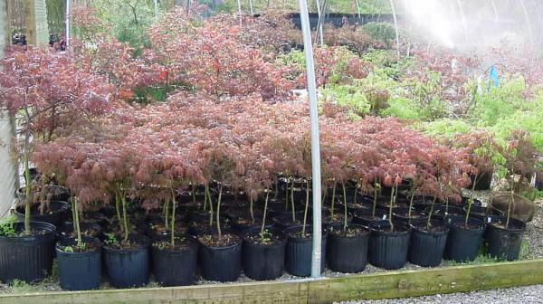 trees shrubs and potted plants