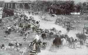 Russian evacuation of cattles