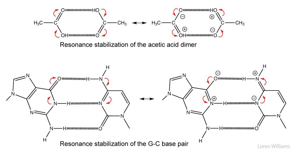 medium resolution of cg base pair