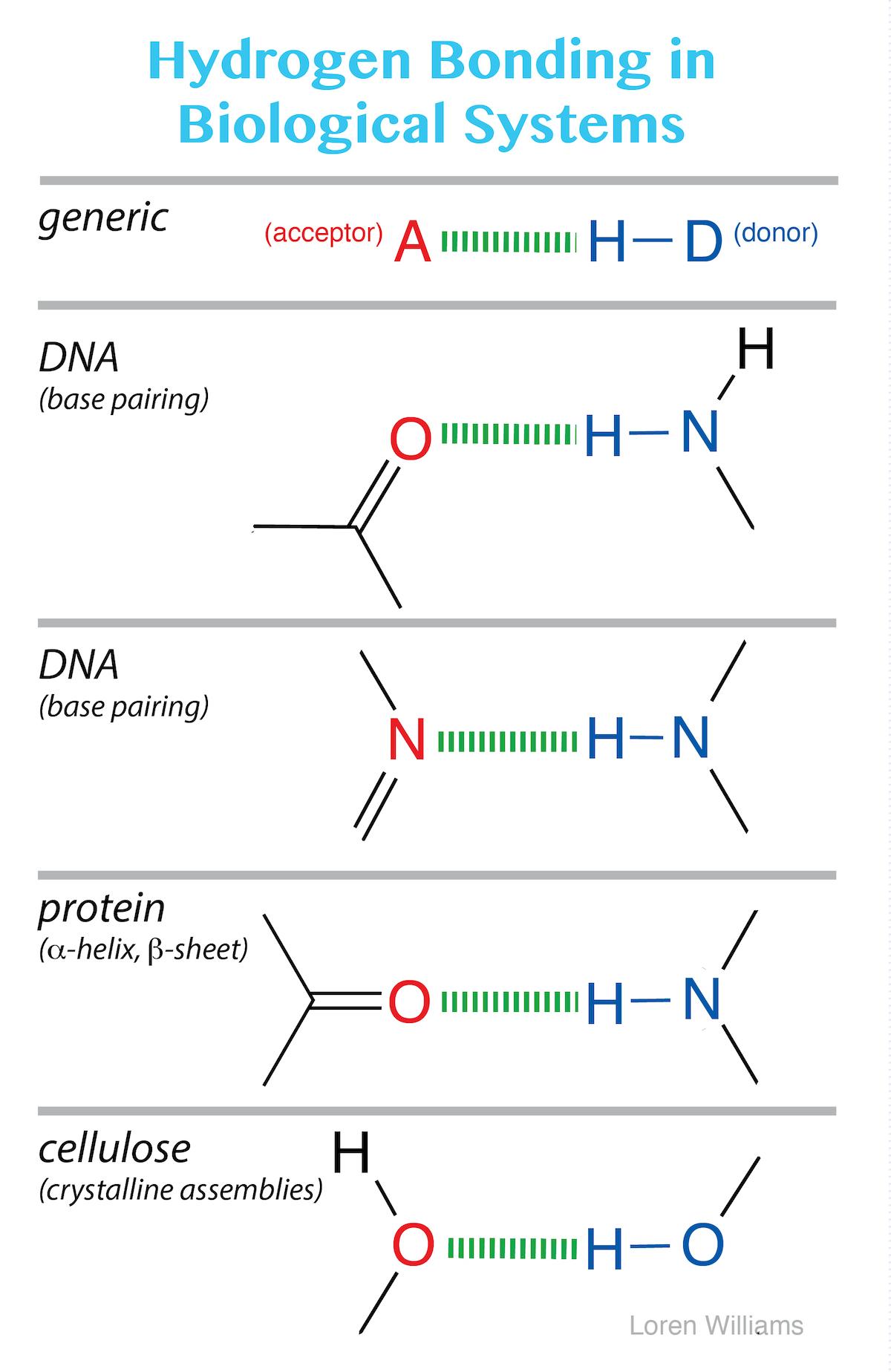 Complex Acid Best Amino