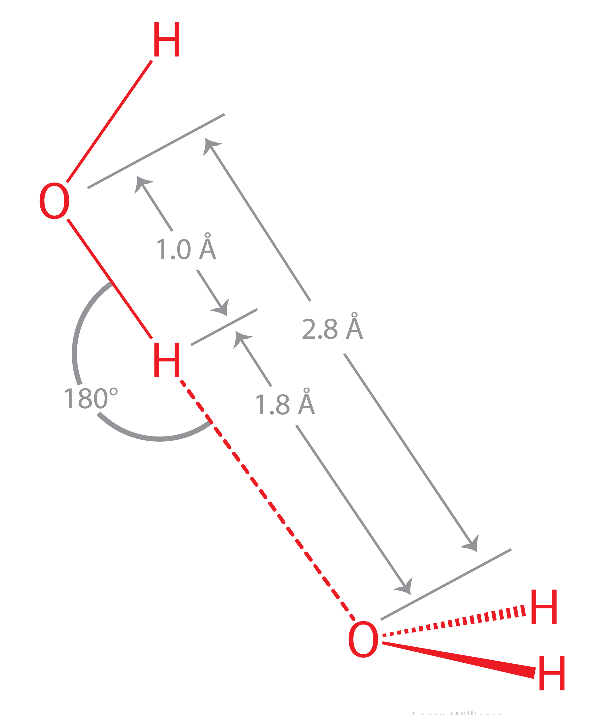 labeled diagram of hydrogen bonding
