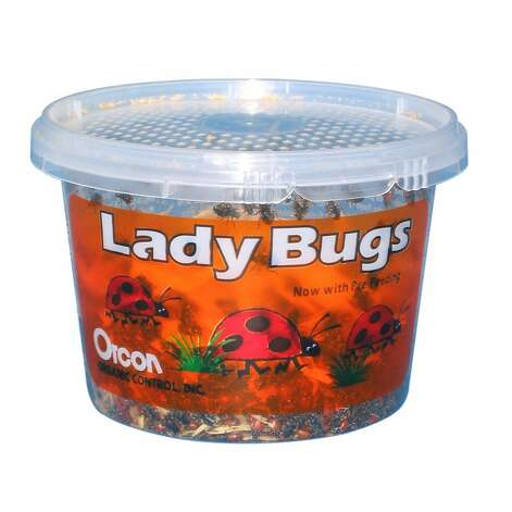 LIVE LADY BUGS: 1,500 for $12? What a deal. Organic gardeners understand why these are for sale on Amazon. (View on Amazon.) / SL