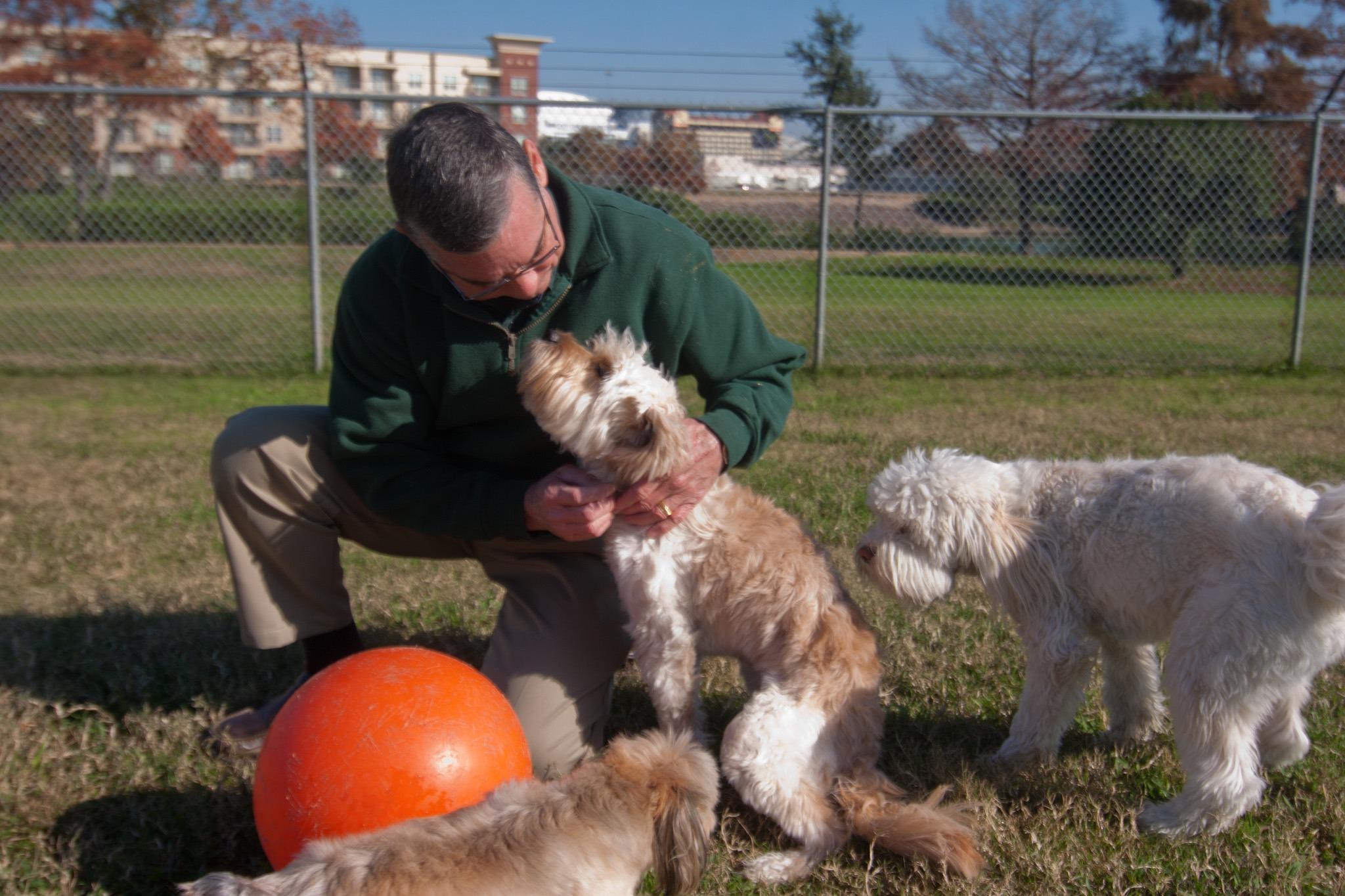 Dog daycares coddle canines Houston Chronicle