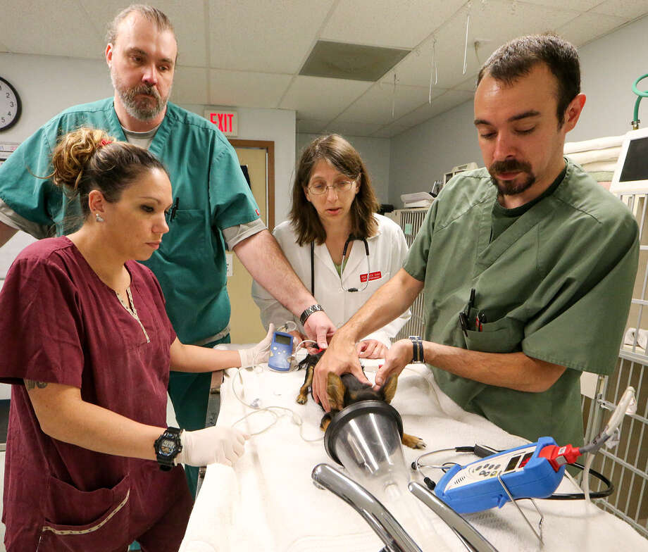 Animal Emergency Room provides medical care and a little loving to injured sick animals  San