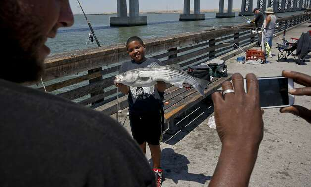 Walter Suazo Jr., 9, of Concord shows off a 32-inch striped bass he caught from the Antioch pier on the San Joaquin River. A critique of the state's $25 billion plan for delta tunnels says they would bring winter-run salmon to the brink of extinction. Photo: Michael Macor, The Chronicle