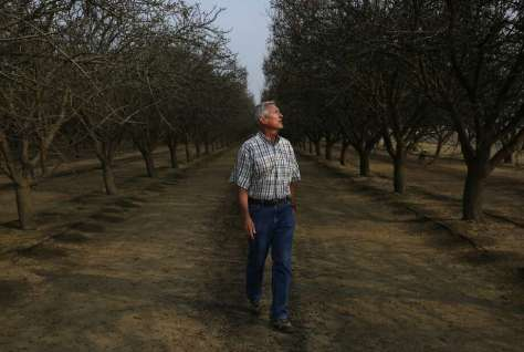 Kern County farmer Mike Hopkins says he lost a cherry orchard to oil-industry wastewater contamination. Photo: Leah Millis, The Chronicle