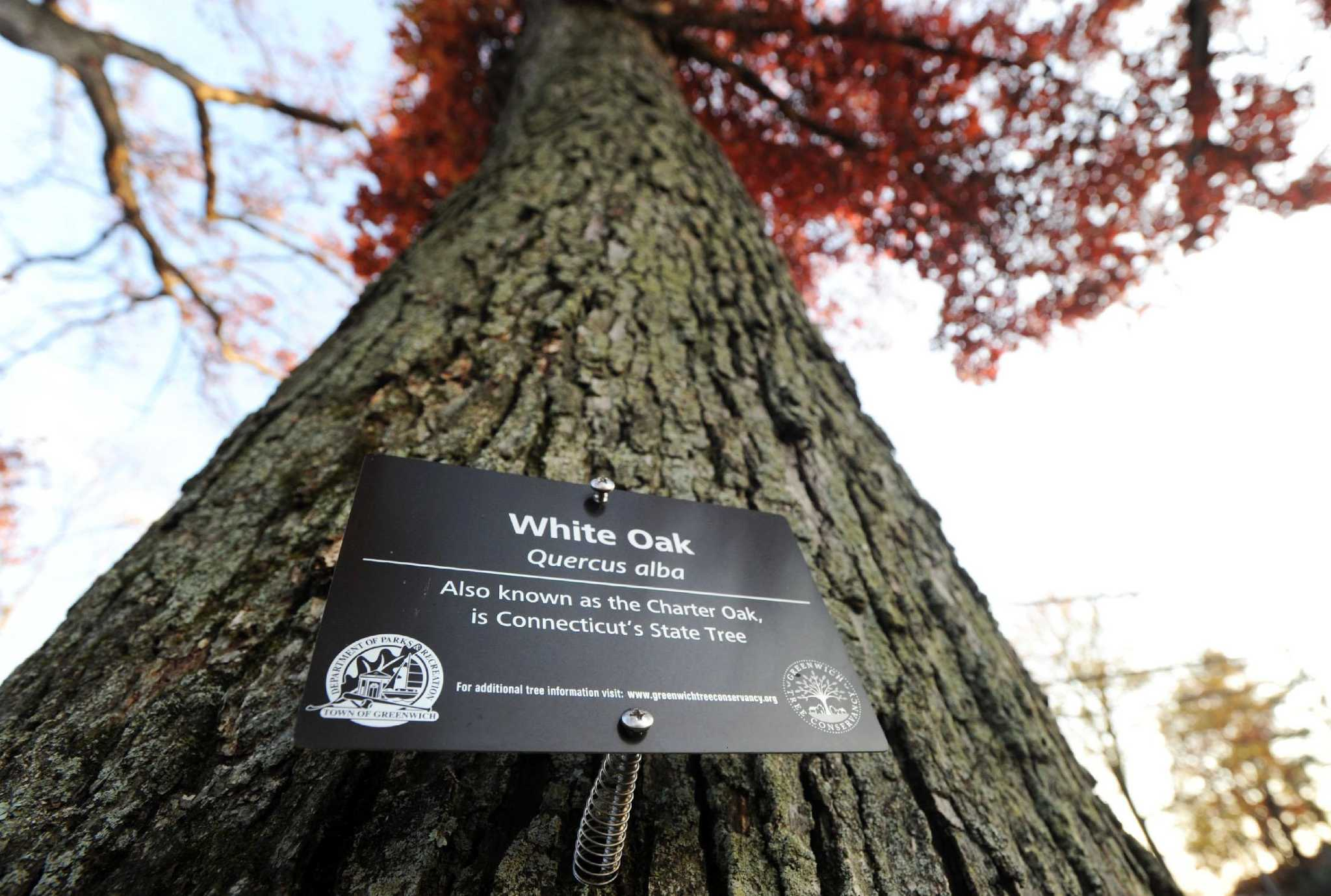 Move Under Way To Catalog Label Greenwich Trees