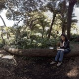 360 Video: Artist Jane Kim Illustrates Golden Gate Park's Entwined Ecologies