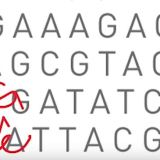 Explainer: The CRISPR/Cas9 Advance That Makes Gene Editing Significantly More Precise