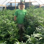 How Will Small Marijuana Growers Stay Competitive if California Legalizes It?