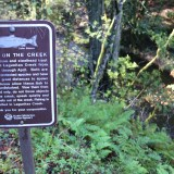 Marin's Lagunitas Creek Welcomes Unexpected Guests in this Year's Spawning Season