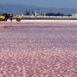 What Are Those Weird, Pink Ponds in San Francisco Bay?
