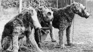 Dogs at World War 2 - WW2 Gravestone