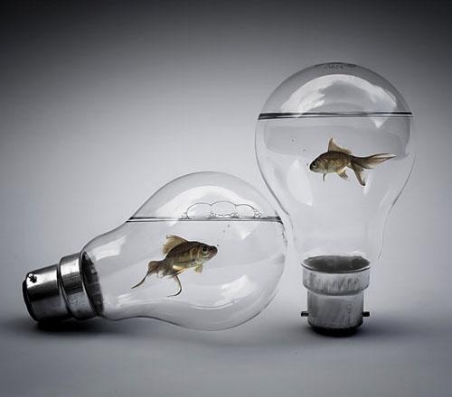 fish in light bulbs