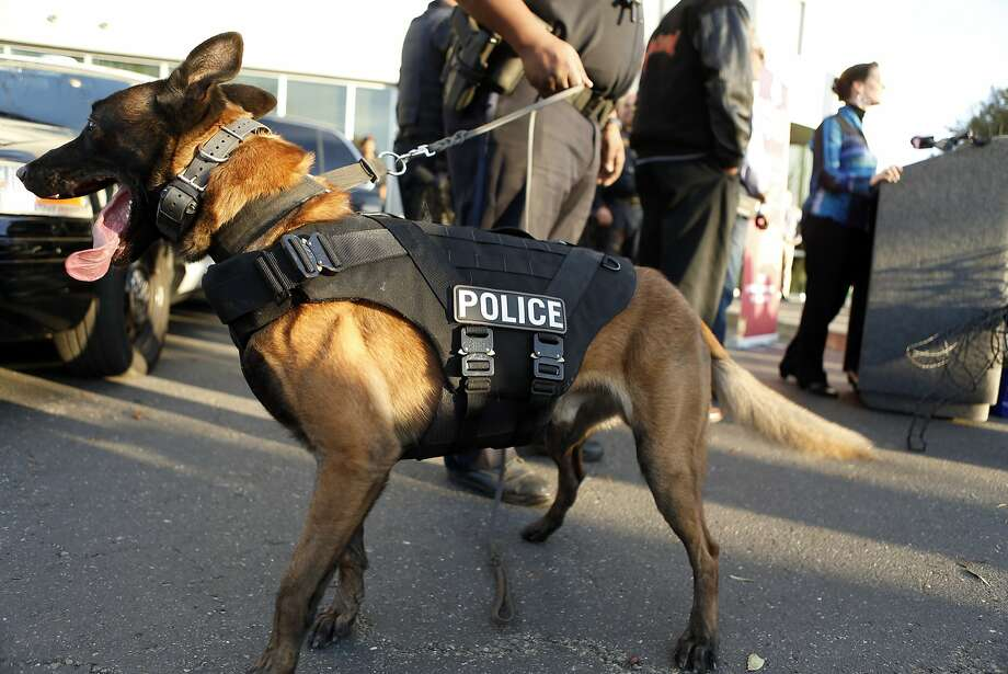 A file photo of a police K-9 dog. A police officer in Richmond shot a department K-9 after the dog bit him. Photo: Scott Strazzante, The Chronicle