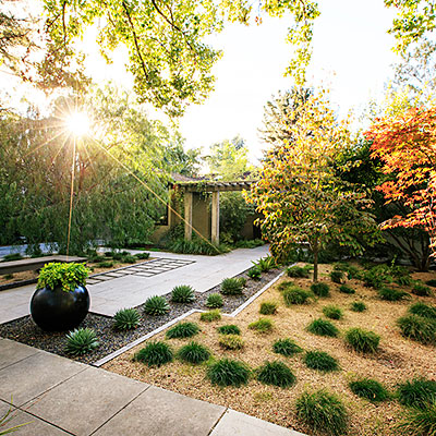24 Great Ideas For Lawn Free Yards SFGate