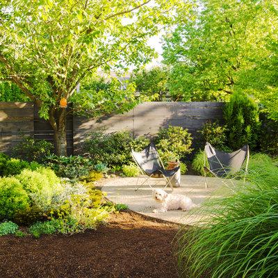 create dog-friendly garden
