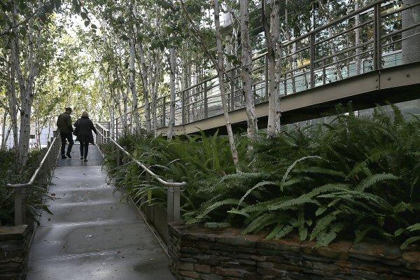 Landscape Design San Francisco
