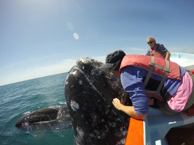 Ali kissing whale