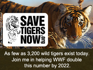 SaveTigersNow E-card