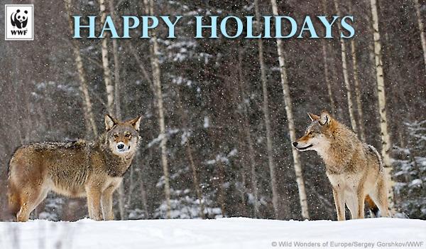 Send Holiday Ecards For Christmas Hanukkah And Kwanzaa