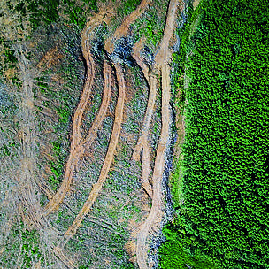 Find 4 ways to say deforestation, along with antonyms, related words, and example sentences at thesaurus.com, the world's most trusted free thesaurus. European Parliament Calls For Eu Law On Deforestation Wwf