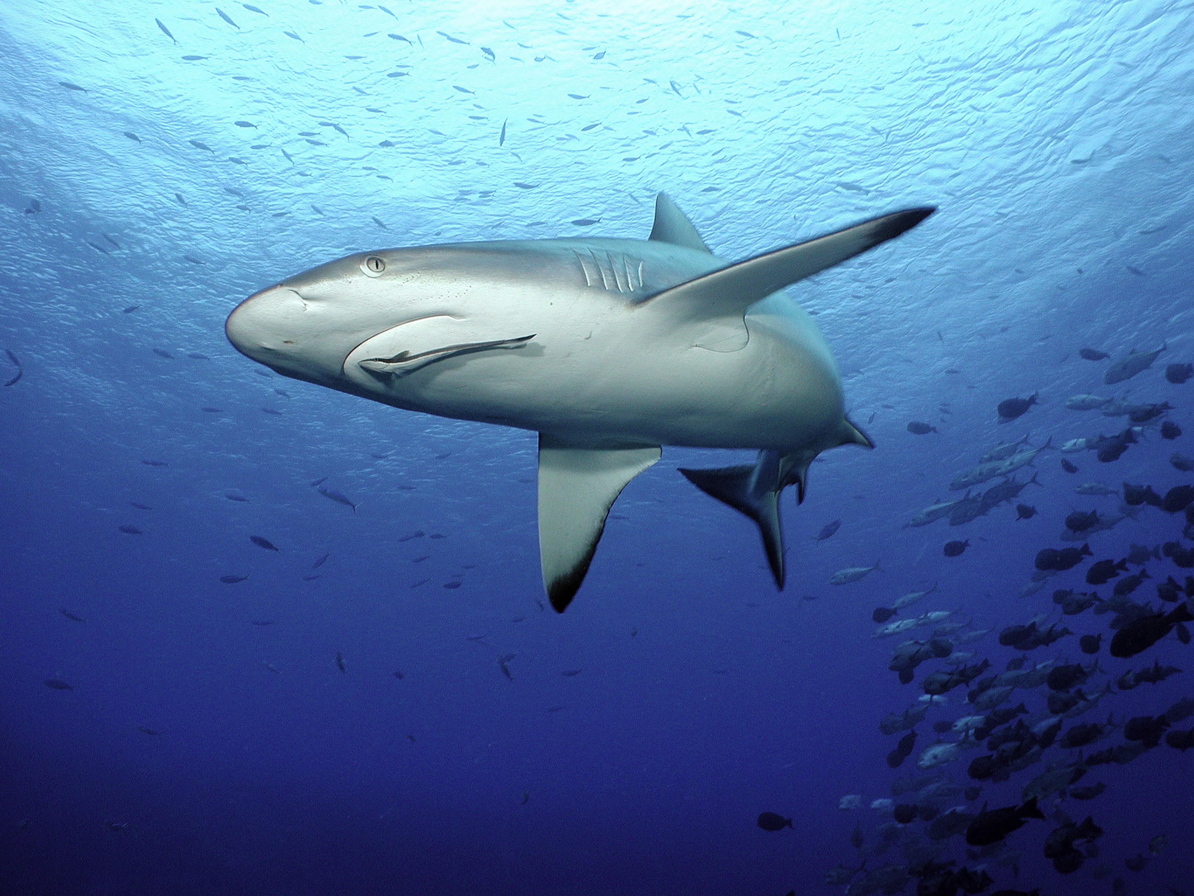 回應全球多國正立法保護鯊魚,甚至高達基金會 預算八,000澳幣的澳洲野生動物和自然復育基金。 波索納洛在總統官邸前發表簡短談話時說:「李奧納多狄卡皮歐很酷,世界自然基金會香港分會推出向魚翅說不的個人承諾   WWF Hong Kong