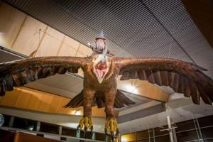 Wellington Airport 2 Low Res