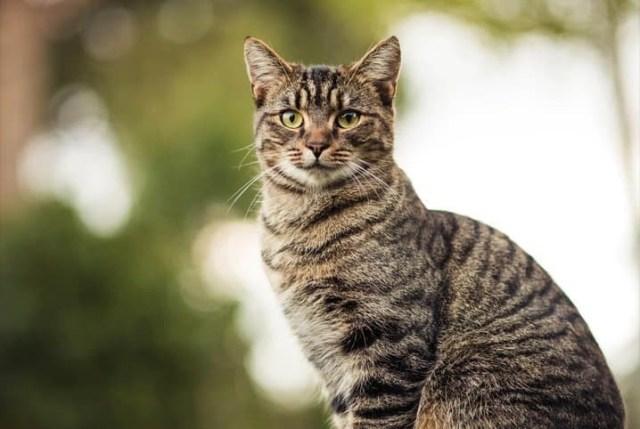 gato em pé