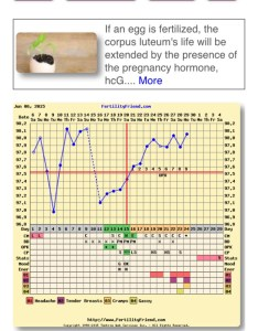 Xxx also possible implantation bbt chart rh boardsdingbee