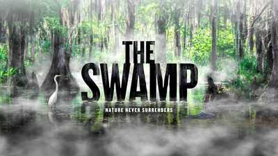 watch the swamp american