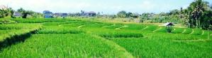 Land for lease in Canggu Berawa