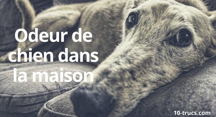 comment enlever l odeur de chien dans