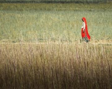 India, © Gregory Whitton