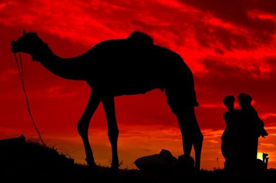India, © Johan Ensing