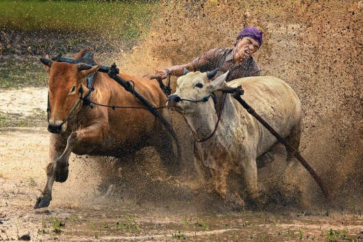 © Alamsyah Rauf - Indonesia