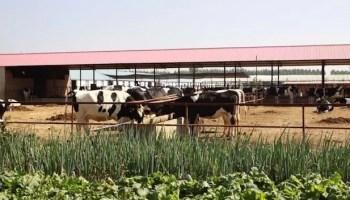 advantages of modern farming