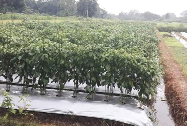 artificial mulching systems